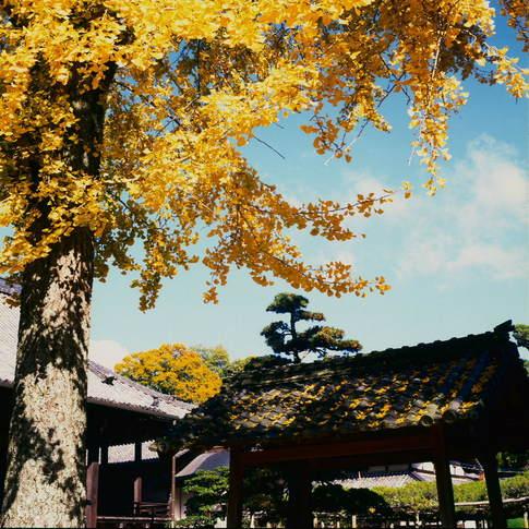 1211-66 Scan 日野本誓寺693.jpg